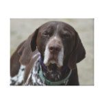 German Shorthaired Pointer Dog Canvas Print
