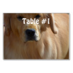 Gorgeous Golden Retriever Table Number