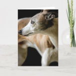 Greyhound Dog  Greeting Card
