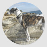 Greyhound Photographs Stickers