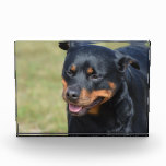 Guileless Rottweiler Acrylic Award