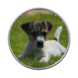 Jack Russel Puppy Jelly Belly Tin