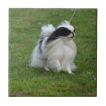 Japanese Chin Ceramic Tile