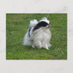 Japanese Chin Postcard