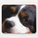 King Charles Cavalier Spaniel Mouse Pad
