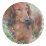 Longhaired Dachshund Plate