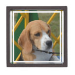 Lovable Beagle Keepsake Box