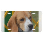 Lovable Beagle License Plate