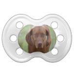 Lovable Vizsla Pacifier