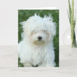 Maltese Puppies Greeting Card