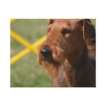 Really Cute Airedale Terrier Canvas Print