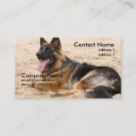 Resting German Shepherd Business Card