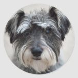 Schnauzer Dog Sticker
