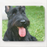 Scottish Terrier Dog Mouse Pad