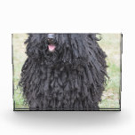Shaggy Puli Dog Acrylic Award
