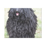 Shaggy Puli Dog Canvas Print