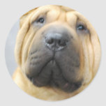 Shar Pei with Wrinkles Stickers