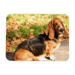 Sitting Basset Hound  Flexible Magnet