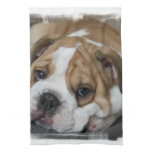 Sleeping Bulldog Towel