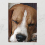 Snoozing Beagle Invitation