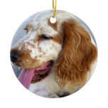 Springer Spaniel Puppy Ornament