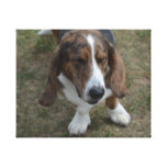Sweet Basset Hound Canvas Print