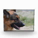 Sweet German Shepherd Dog Acrylic Award