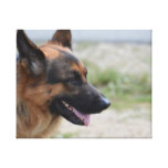 Sweet German Shepherd Dog Canvas Print