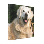 Sweet Golden Retriever Canvas Print