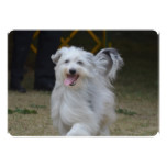 Sweet Sheepdog Card