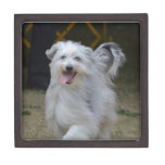 Sweet Sheepdog Gift Box