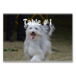Sweet Sheepdog Table Number