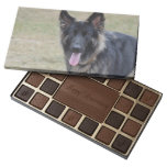 Sweet Shiloh Shepherd Assorted Chocolates