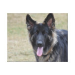 Sweet Shiloh Shepherd Canvas Print