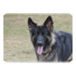 Sweet Shiloh Shepherd Card