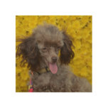 Sweet Tiny Brown Poodle Wood Wall Art