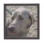 Sweet Weimaraner Jewelry Box