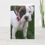 White Boxer Puppy Card